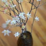 Twig Blossom Bouquet