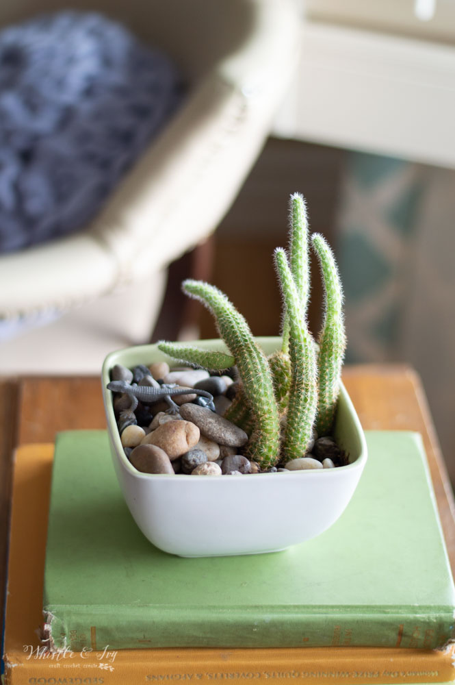 pretty cactus